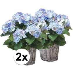 2x blauwe hortensia kunstplant in mand 45