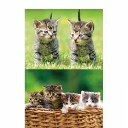 2x dieren magneten 3d kittens