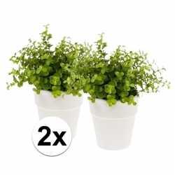 2x kunstplant eucalyptus groen in witte pot 22