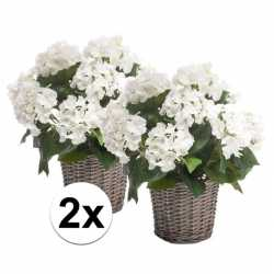 2x witte hortensia kunstplant in mand 45