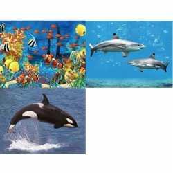 3x dieren magneten 3d vissen