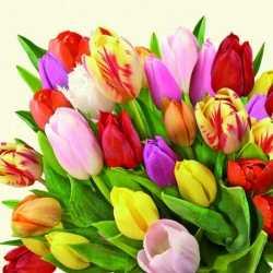 40x tulpen/bloemen voorjaar servetten 33 bij 33