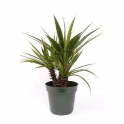 Aloe Ferox kunstplant in pot 71