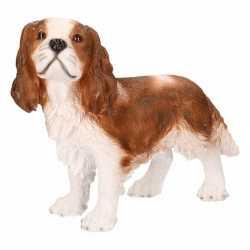Beeld bruine king charles hond 43