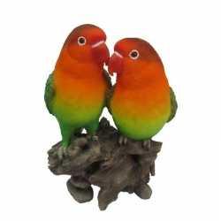 Beeld lovebirds dwergpapegaaien 24