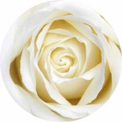 Bierviltjes witte roos 10 st