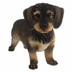 Decoratie dieren beeld ruwharige teckel hond donkerbruin 29