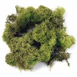 Decoratie mos 200 gram lichtgroen