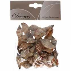 Decoratie schelpen zeeslak/strombus urseum 3