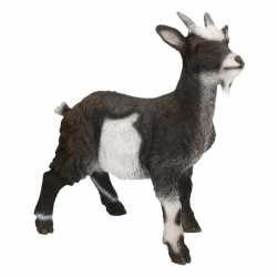 Dierenbeeld geit 40