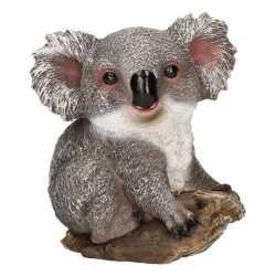 Dierenbeeld koala 20