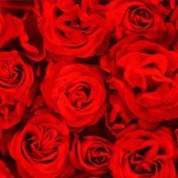 Inpakpapier rode rozen 200 bij 70 op rol