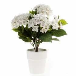 Kunstplant hortensia wit in witte pot 37
