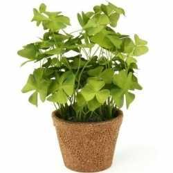 Kunstplant klavertje groen in pot 25