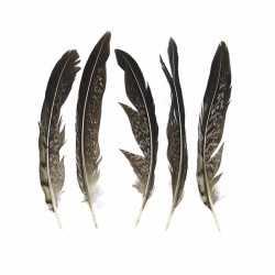 Lady amherst fazant veren 13 5 stuks