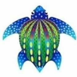 Schildpad vlieger 55 bij 65