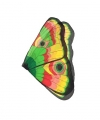 Vlinder vleugels gekleurd kids