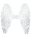 Witte vleugels 60